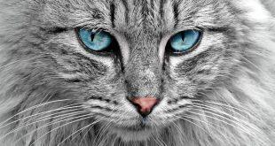 למה צריך חול לחתולים
