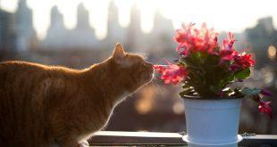פרחי באך לחתולים