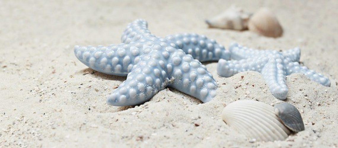 starfish-2423999_640